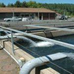 تصفیه آب پرورش ماهی