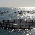 قفس پلی اتیلن پرورش ماهی